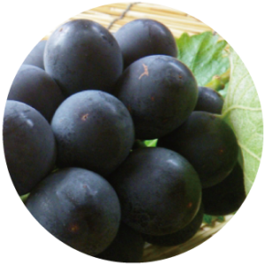 Grape fruit cell extract
